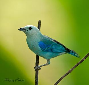 Birds plus other creatures of Trinidad and Tobago