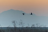 Mount Diablo and sandhill cranes