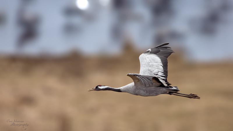 Incoming Crane