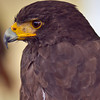 Red Tailed Hawk<br /> © 2010 Howard Pitkow. All Rights Reserved.