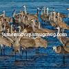 Hey fellow sandhill cranes
