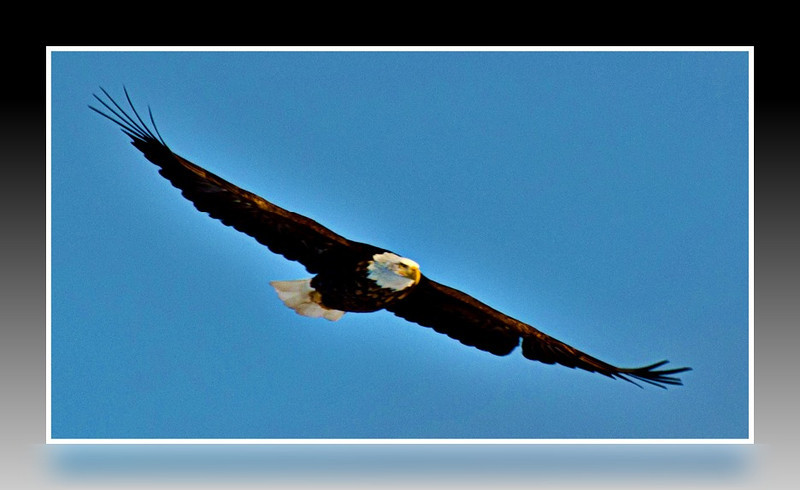 Soaring High...On the Wings of an Eagle