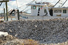 """At the Bluffton Oyster Company, Bluffton, SC<br /> <br />  <a href=""""http://www.blufftonoyster.com/"""">http://www.blufftonoyster.com/</a><br /> <br /> Semi-Palmated Plovers on the pile of recently shucked oyster shells."""