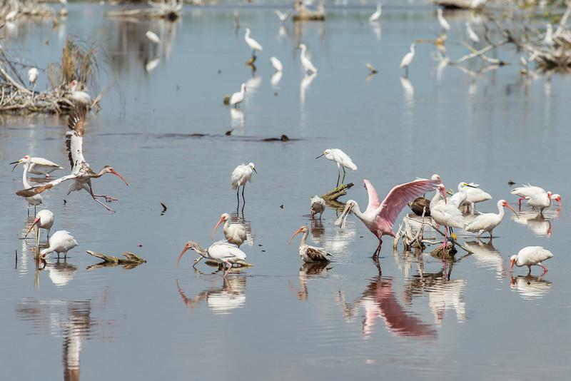 Wetlands, Puerto Morelos, Quintana Roo