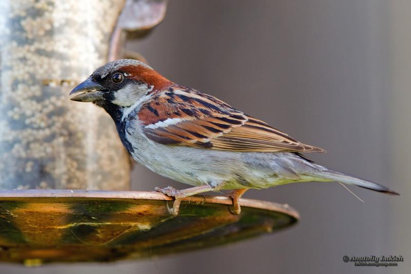 IMAGE: http://lukich.smugmug.com/Animals/Birds/i-ZHP3js6/0/L/201106072975-L.jpg