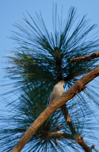 Bird in a tree Alabama USA