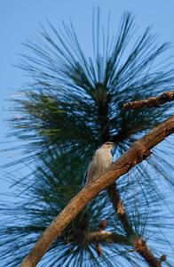 Bird in a tree Alabama USA