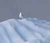 Iceland Gull<br /> Narsarsuaq