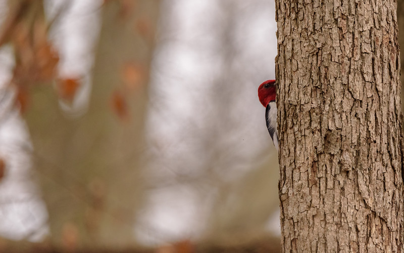 peek a boo at Indiana Dunes State Park