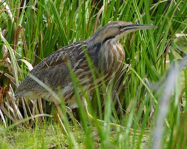 Birdwatching 101, Wilmington College 2013