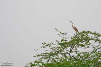 - Sultanpur Bird Sanctuary, Haryana, India