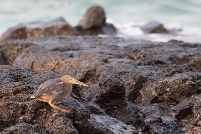 - Isla Santa Cruz, Galapagos, Ecuador