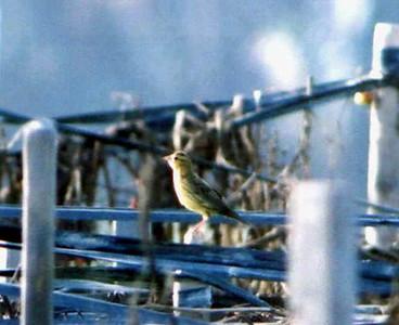 Tijuana River Valley-October 2001