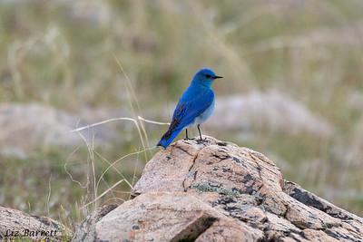 Blue Bird_0U2A8182