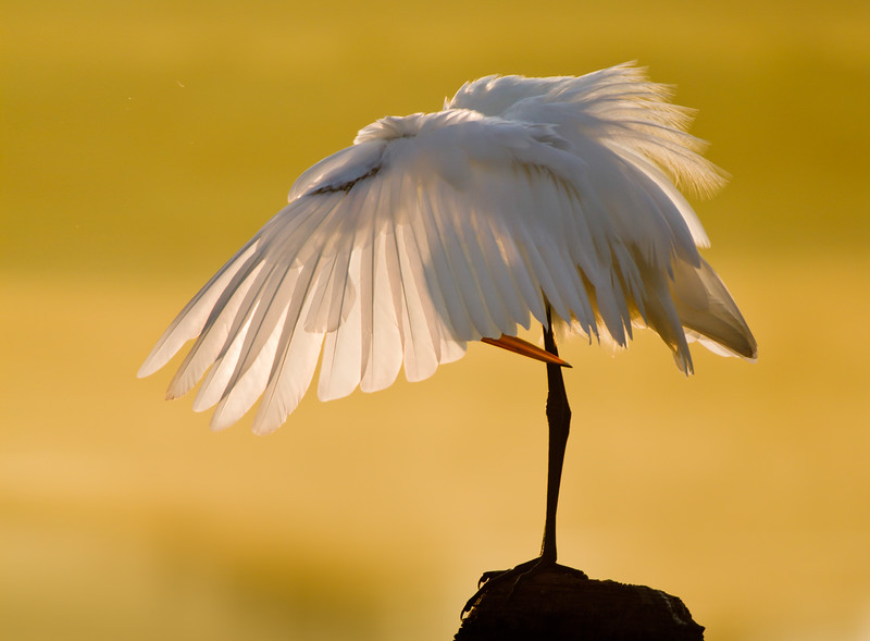 This photo received an honorable mention in the 2014 National Wildlife Federation's annual photo contest.