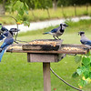 Who says Blue Jays can't have a committee meeting during lunch?