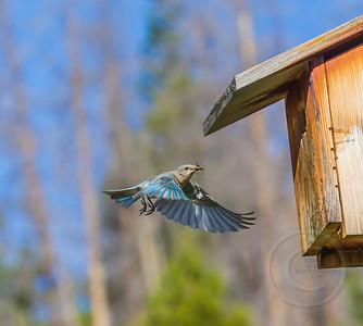 Breakfast Bug with Birdhouse