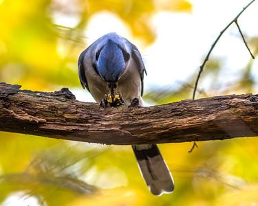 Birds 0051
