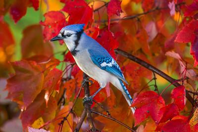november backyard birds 0200
