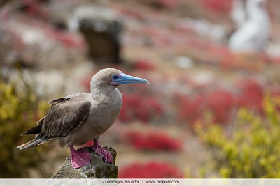 - Galapagos, Ecuador