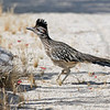 We saw our first roadrunner as it dashed across Hwy 86 right in front of us. Hal nearly had a road kill at 65 MPH. I wonder why they don't fly over the highway?