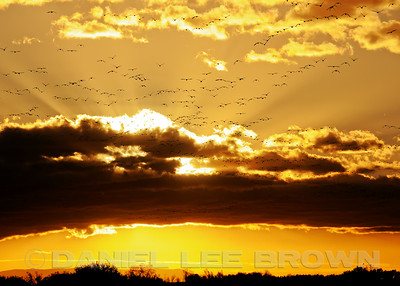 SUNRISE #3 AT BOSQUE DEL APACHE, 2014