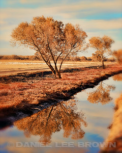 BOSQUE DEL APACHE TREES.