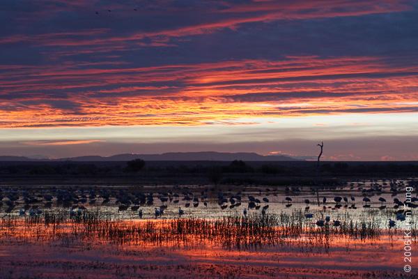 Dawn at the Bosque