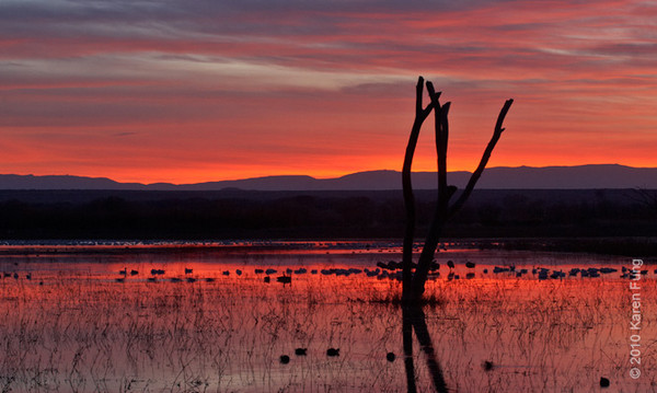 6 December:  Dawn at Bosque del Apache, NM