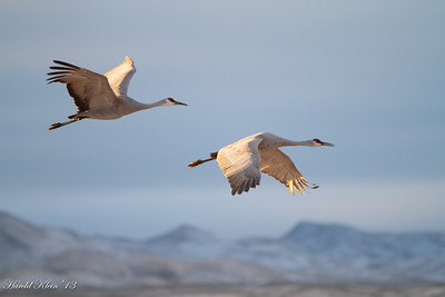 Bosque del Apache December 2013-16