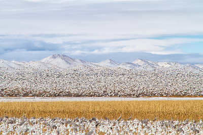 Bosque del Apache December 2013-6