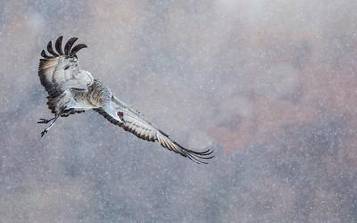 2013 Crane in snow-1