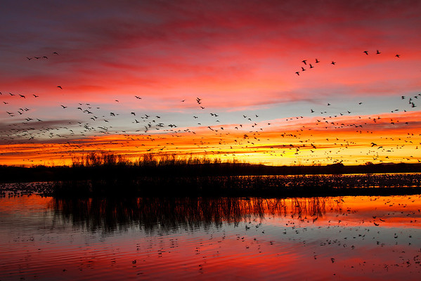 This picture captures the essence of the sunrise at Bosque del Apache...