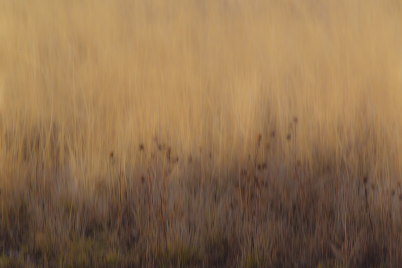 Pastel colours of the wild areas around the crane and goose roosting pools