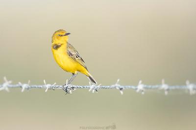 Yellow Chat