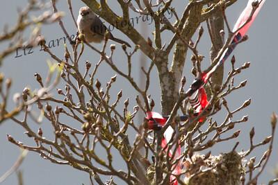 IMG_6071 - Bushtit nest
