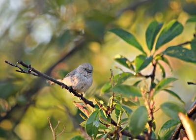 California Birds -- 1H 2015