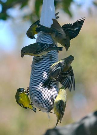 California Birds -- 2H 2014