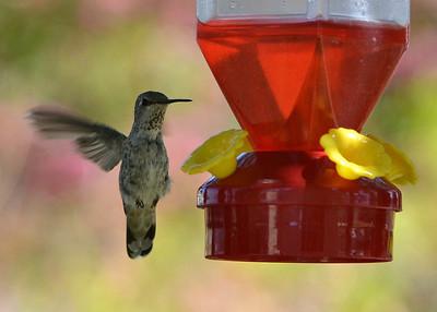 California Birds -- 2H2013