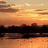 Gray Lodge Wildlife Area 2014 372