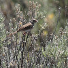 Vesper Sparrow 2013 _MG_0124