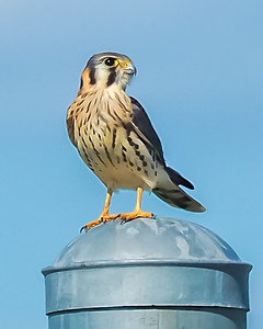 Airport Kestrel