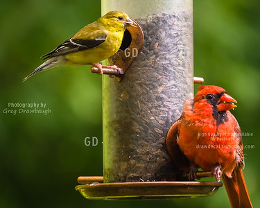 Little Yellow and Big Red