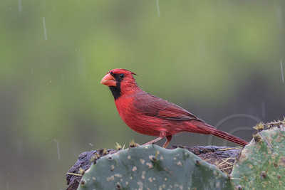 Red in the Rain
