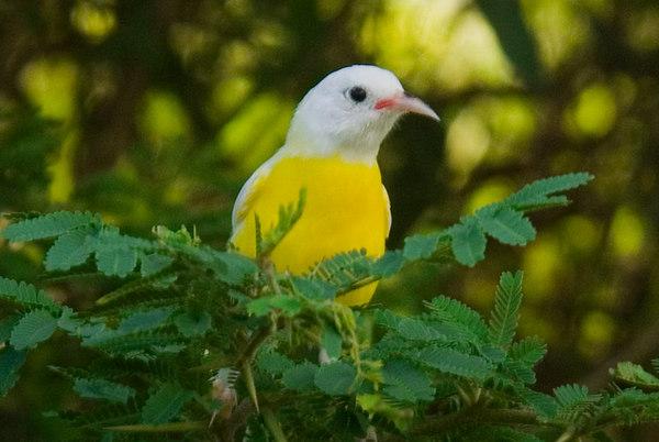 Birds of Saint Barthelemy