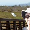 Snowy Egret up close - Carpinteria Salt Marsh