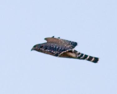 Caw Caw - 2012 Feb 11 - Test Shots