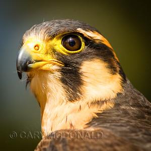 Center for the Birds of Prey