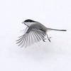 black-capped chickadee: Poecile atricapillus