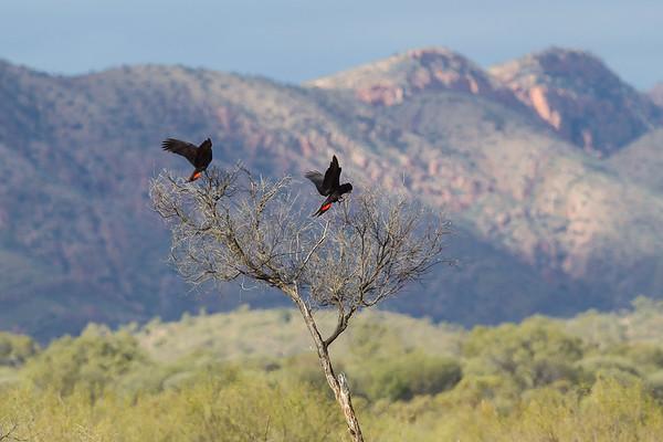 David Stowe-RTB_birdscape-5414